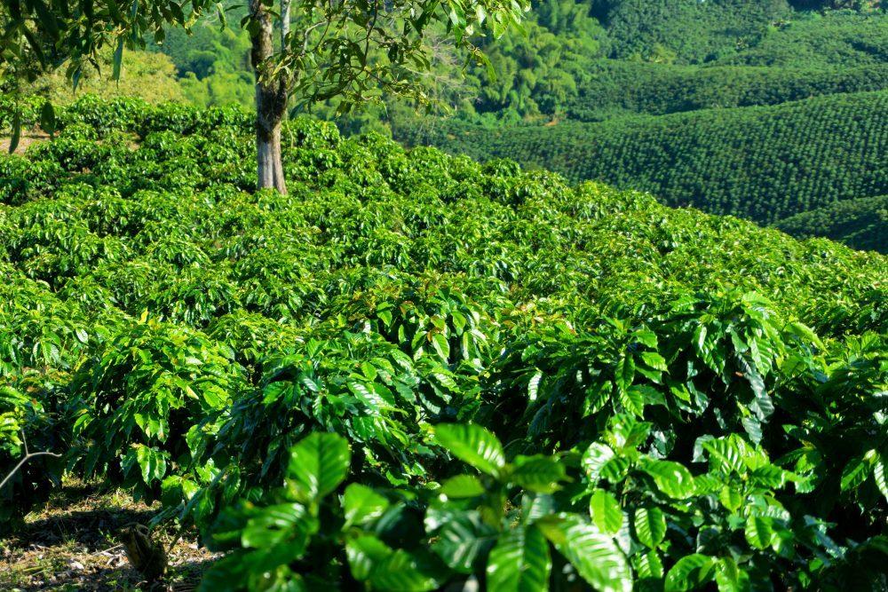 colombia-plants-e1517167039460
